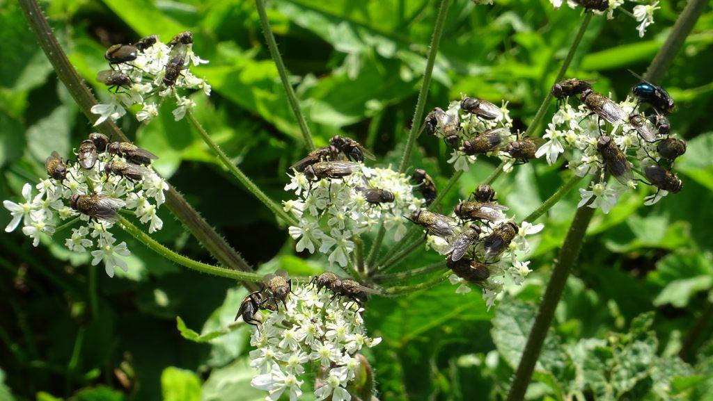 Insekten auf Nahrungssuche